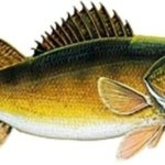 """BACK TO BASICS  WITH """"THE BANDIT""""  EYES IN THE DARK :Fishing with DiFranco"""