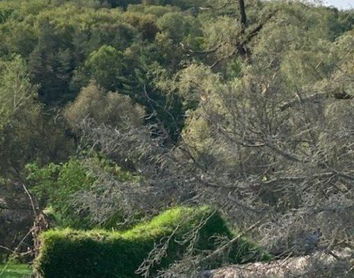 Tornado Touches Springwater