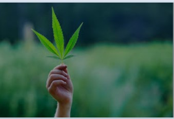 NYS Mandates That Testing Your Employee For Cannabis Can Be Discrimination